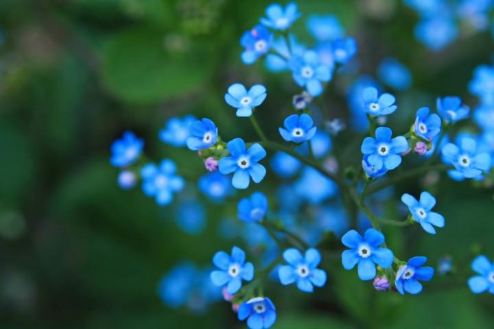 Blue Plants Aesthetic
